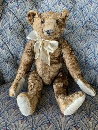 """Rare Wonderful Early Antique Steiff ? 16"""" Bear Overall For Age Look"""