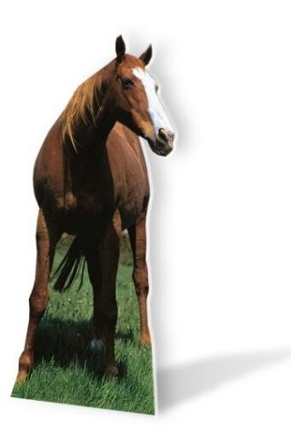 Mustang Horse Lifesize Cardboard Cutout Fun Figure 190cm Tall - For Your Party