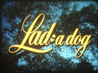 """ Lad: A Dog "" (1962) - Peter Breck - Gorgeous Lpp"