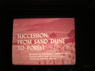 16mmsuccession; From Sand Dune To Forest 800