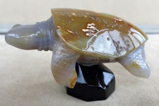 Sea Turtle Carved From Brazilian Agate 3.  1/4 ""