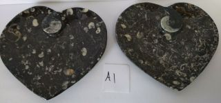 Set Of 2 Orthoceras Ammonite Fossil Heart Plates Morocco 8 Inch X 7.  75 Inch
