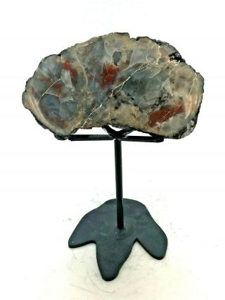 """Ancient Fossil Dinosaur Poop """" Coprolite """" On A Stand - 156/146 Myo - Small"""