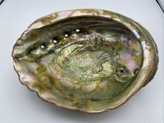 """Huge 11 1/4"""" Vintage Estate 1960's Red Abalone Shell Gorgeous 4lbs 9oz"""